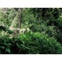 Goethe_garden