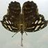 Allison-hunter-butterfly3-70dpithumbnail