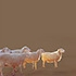 Allison-hunter-sheeps-untitled14-70dpithumbnail