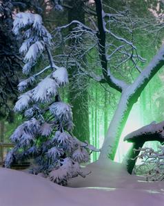 Illuminated_forest