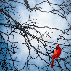 Cardinal, Stefani Tewes