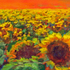 Sunflowers_forever_8_22x10_22