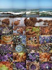 Laguna Beach, California , Matthew Chase-Daniel