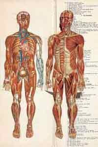 20120307195522-bb-anatomy-book