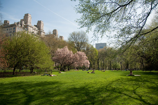 East Green, Central Park, April 2010, Rebecca Yale