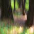 Treetrunkimpressions
