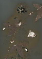 Lumen, Anita White