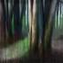 Mescalintrees