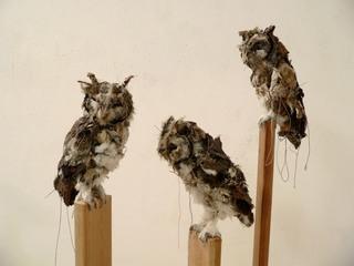 Untitled (Western Screech Owls), Kathryn Spence