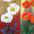 Double_poppies_2