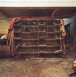 Cages_3974_6_r
