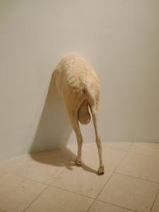 Tguntitled_goat_
