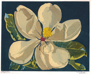Magnolia, William S. Rice (1873 - 1963)