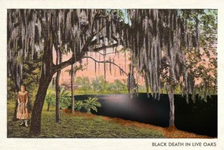Black Death in Live Oaks, Jessica Goldfinch