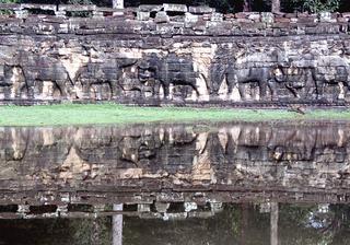 Elephant Terrace, Nancy Goldring