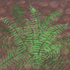 As_croppedgreen_fern_800_dpi