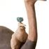 Ostrich_rider