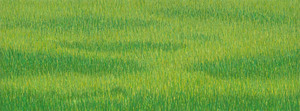 Light_green_grassland-3_2010_11x30-web