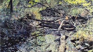 Fallen Trees Turtle Creek, William Nichols