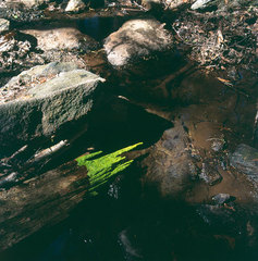 Fresh, thin leaves / wrapped around rotted trunk / held with water / Lennox, Massachusetts / 13 May 2005, Andy Goldsworthy