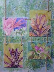 20100809054710-beyla_medina_serie_jardines_colgantes_bromelias_3