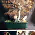 20100811070639-autumn_bonsai_composit_copy