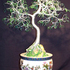 20100811074305-oriental_bonsai_composit_copy