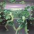 20100812033032-boxers