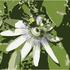 20100816102525-18-chanticleer_bee_x7