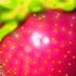 20100824201219-strawberry_iii