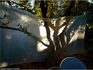 Apple Tree Screen 3, Nancy Sutor
