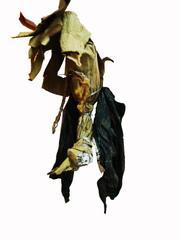 dead birds, siddhartha kararwal