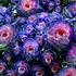 20100909125839-succulents_huntington_gardens