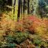 20100909171855-forest_light_dogwoods
