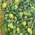 20100909180203-lemons_of_valpariaso_oil_on_canvas_20x24__2_