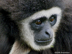 20100910045023-monkey_close_up_no