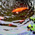 20100912184313-koi-water-whirl-mex-copy-lisa300dpi