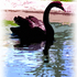 20100912185852-black_swan-painting-pb-300