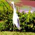20100912190010-bird