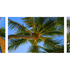 20100913063121-a_lovely_coco_palms_evening_it_is__triptich__horizontal_