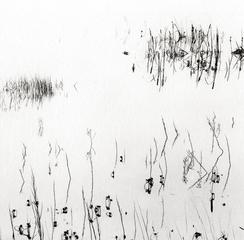 Reeds, San Luis Reservoir, Ryuijie