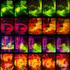 20100923130901-gorilla-smallflat_copy