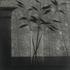 Window_w_vase___forest