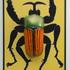 20100930115454-beetle