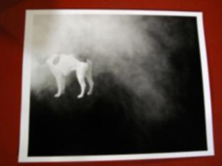 Dog in Fog, Stephanie Taylor