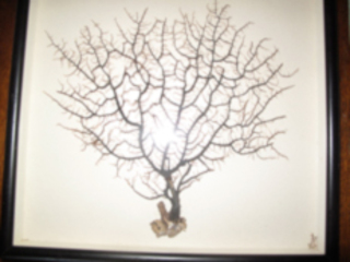 Tree root that I put in a frame, Sawako Nakayasu