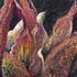 20101004202120-flower_petals_3-11-small