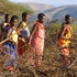 20101006144013-songs_of_the_masai