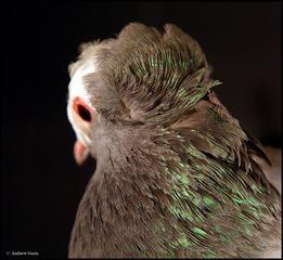 Pigeon Head #038, Andrew Garn