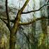 20101010125755-moss_on_tree_16x20
